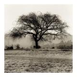 Willow Tree Prints by Alan Blaustein