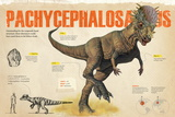 Infographic About the Pachycephalosaurus, a Herbivorous Dinosaur from the Cretaceous Period Pôsteres