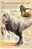 Infographic About the Tyrannosaurus Rex, a Predator That Lived During the Cretaceous Period Posters