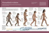 Infographic, from Australopithecus to Homo Sapiens (From 4 Million Years to 150,000 Ago) Posters