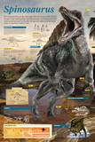 Infographic of the Spinosaurus, One of the Largest known Theropods of the Cretaceous Period Posters