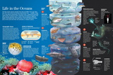 Infographic of the Species Which Inhabit the Oceans According to the Climate Conditions Photo