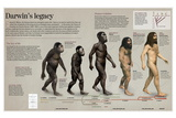 Infographic About the Impact of the Evolution Theory by Darwin in Science and Theology Prints