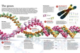 Infographic of the Structure of Dna and the Mechanism of Genetic Inheritance in People Pôsters
