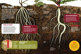 Infographic About the Roots of Plants: What They Are, What their Structure Is Prints