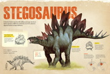 Infographic of the Stegosaurus, a Herbivorius Dinosaur from the Ornithischia Family (Jurassic) Poster