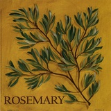 Rosemary Print by Kate McRostie