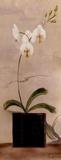 Asian Orchid II 高画質プリント : ジェニファー・マルタ