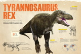 Infographic of the Tyrannosaurus Rex, a Carnivorous Dinosaur from the Cretaceous Period Pôsters