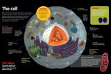 Infographic Where the Parts of a Cell are Described, its Types and its Functions Poster