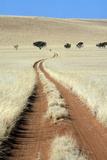 Tracks Tracks of 4 x 4 vehicles cut through bushman grass in the Namib Desert, Namibia Photographic Print by David Hosking