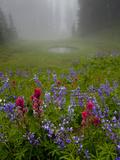 Misty forest pool with broadleaf lupin and magenta paintbrush, near Dewey Lake, Mount Rainier Fotoprint van Bob Gibbons