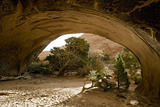 Trees and natural sandstone arch in desert, Navajo Arch, Arches , Utah Fotoprint van Bob Gibbons