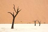 Dead trees in desert clay pan, Deadvlei, Namib-Naukluft , Namib Desert Photographic Print by Andrew Linscott