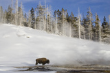 A winters day in Yellowstone national park with bison and geothermal pool Photographic Print by David Hosking