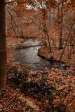 River in autumn woodland habitat, Cross River, Ward Poundridge County Park, Salem Fotoprint van Bob Gibbons