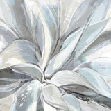 Cereus Aloe Poster par Tania Bello