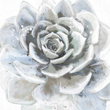 Cereus Sempervivum Art par Tania Bello