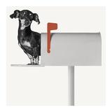 You've Got Mail Print van Jon Bertelli