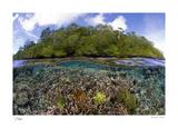 Blue Water Mangroves Spesialversjon av Maurine & Burt Jones-Shimlock