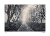 Blossoming Path