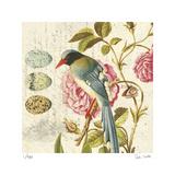 Bird Study 1 Édition limitée par Paula Scaletta
