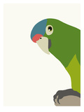 Parrot Prints by Jorey Hurley
