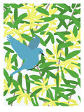 Acacia And Mountain Bluebird Poster by Jorey Hurley