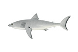 White Shark (Carcharodon Carcharias), Fishes Prints by  Encyclopaedia Britannica