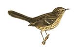 Sage Thrasher (Oreoscoptes Montanus), Birds Posters par  Encyclopaedia Britannica
