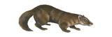Sable (Martes Zibellina), Weasel, Mammals Fotografía por  Encyclopaedia Britannica