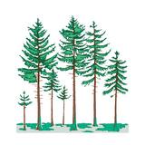 Vegetation Profile of a Boreal Forest. Biosphere, Earth Sciences Poster von  Encyclopaedia Britannica