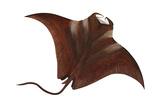 Manta (Manta Birostris), Fishes Kunstdruck von  Encyclopaedia Britannica