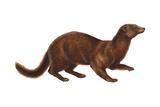 Mink (Mustela Vison), Mammals Poster von  Encyclopaedia Britannica