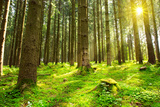 Sunlight in Forest. Fotoprint van  swkunst