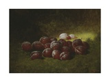 Purple Plums, 1895 Giclee Print by Carducius Plantagenet Ream