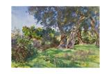 Olive Trees, Corfu Reproduction procédé giclée par John Singer Sargent