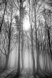 Sassofratino Reserve, Foreste Casentinesi National Park, Badia Prataglia, Tuscany, Italy Impressão fotográfica por  ClickAlps