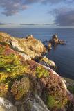 Pointe Du Van, Brittany, France. Heather Flowering Illuminated by First Sun Rays Impressão fotográfica por  ClickAlps