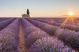Provence, Valensole Plateau Fotografisk tryk af Francesco Riccardo Iacomino