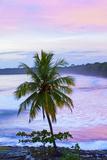 Costa Rica, Cahuita, Cahuita National Park, Lowland Tropical Rainforest, Caribbean Coast, Dawn Fotografisk tryk af John Coletti