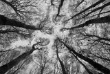 Sassofratino Reserve, Foreste Casentinesi National Park, Badia Prataglia, Tuscany, Italy Trykk på strukket lerret av  ClickAlps