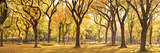 Usa, New York City, Manhattan, Central Park, the Mall Impressão fotográfica por Michele Falzone