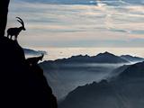 Two Alpine Ibex Dominate from Above the Spectacular View of the Italian Alps. Impressão fotográfica por  ClickAlps