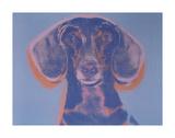 Portrait of Maurice, 1976 Poster von Andy Warhol