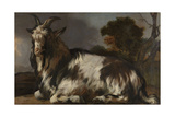 Goat Lying Down Arte por Jan Baptist Weenix