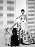 Audrey Hepburn Walking Dogs Sabrina Fotografia por  Movie Star News