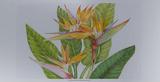 Exotic Flowers II Juliste tekijänä Tim O'toole