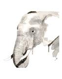 Elephant Stampe di Philippe Debongnie