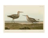 Long-Legged Sandpiper Kunstdrucke von John James Audubon